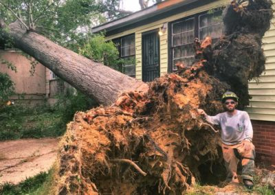 Stump Removal Prattville, AL